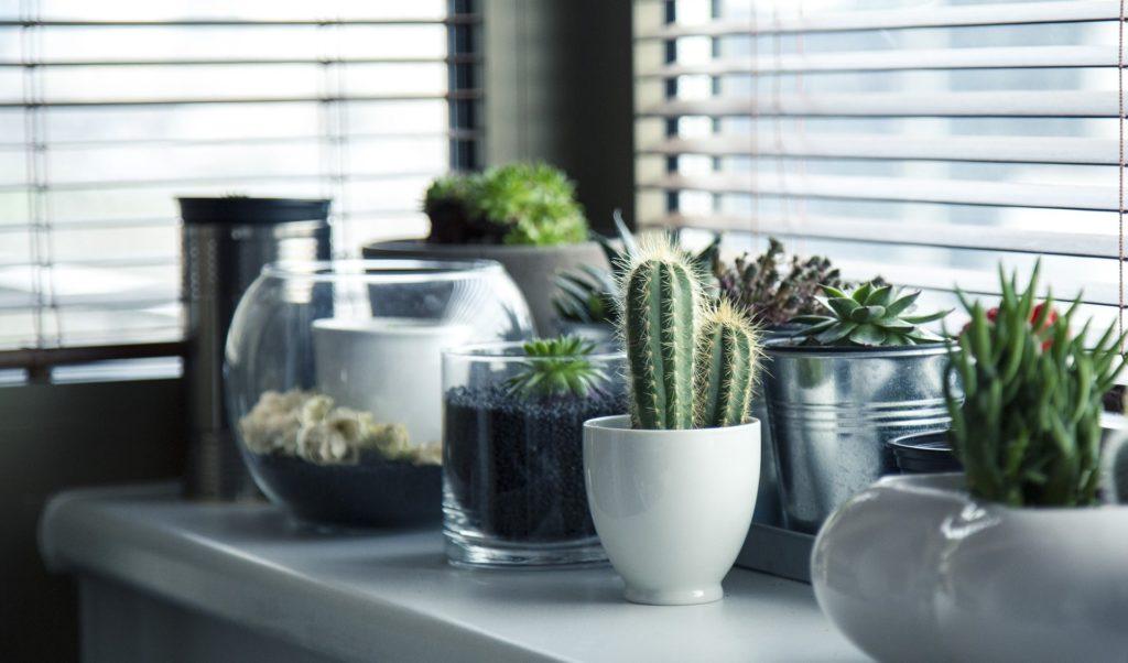 Indoor Plants in Planters on Windowsil